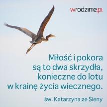 Mem 133 Skrzydla